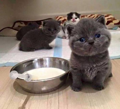 kittens_05