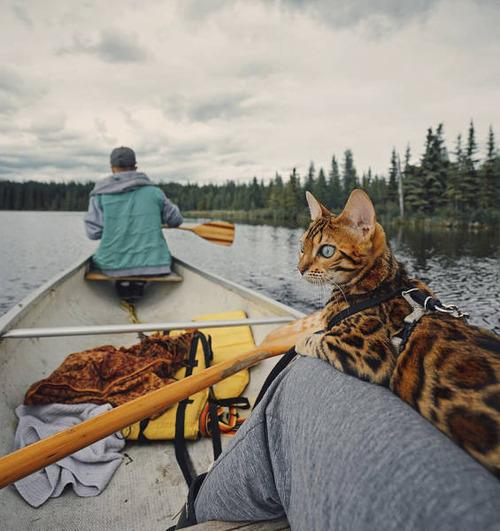 美しい風景と猫の画像(19枚目)
