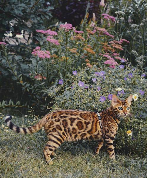 美しい風景と猫の画像(17枚目)