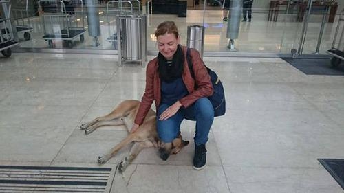 スチュワーデスさんに拾われた犬の画像(3枚目)