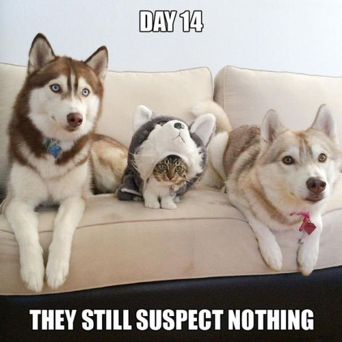 隠れているつもりの猫の画像(1枚目)
