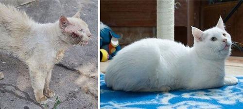 【画像】子汚い野良猫を拾って育てたら、こんなに可愛いニャンコになりましたよ!の画像(16枚目)