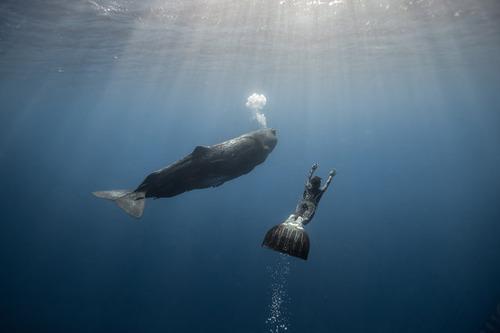 【画像】マッコウクジラといっしょに泳ぐダイバーの写真の画像(14枚目)