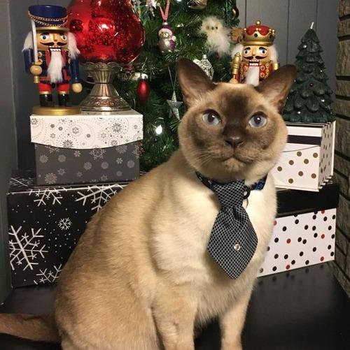 クリスマスのコスプレをした動物達の画像(30枚目)