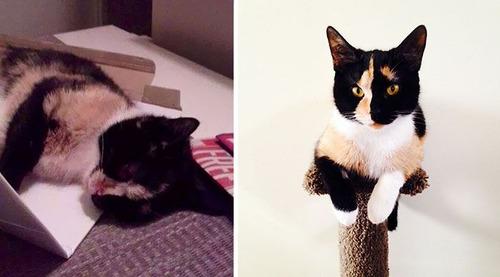【画像】子汚い野良猫を拾って育てたら、こんなに可愛いニャンコになりましたよ!の画像(25枚目)