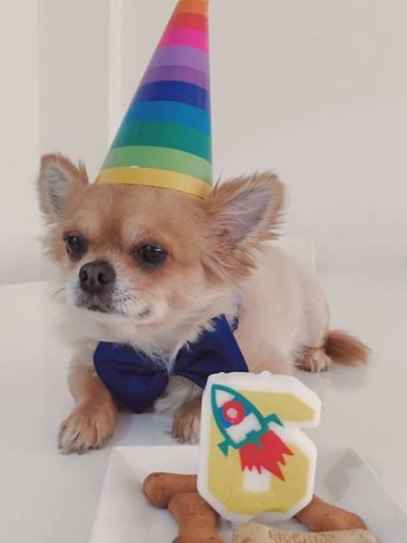動物達の誕生日の写真の数々!!の画像(16枚目)