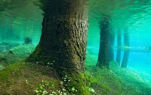 美しく神秘的な水辺の画像(35枚目)