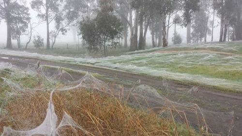 蜘蛛の巣が一面を覆う草原の画像(2枚目)