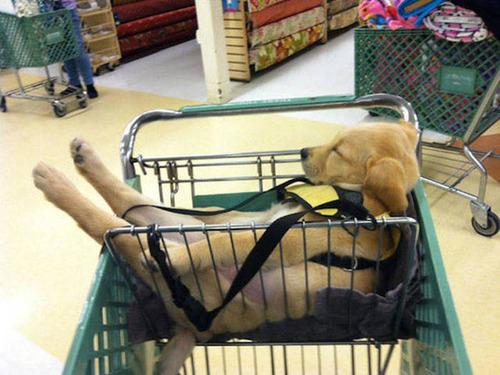 どこでも寝れる!?どこでも寝てる可愛い犬の画像の数々!!の画像(16枚目)