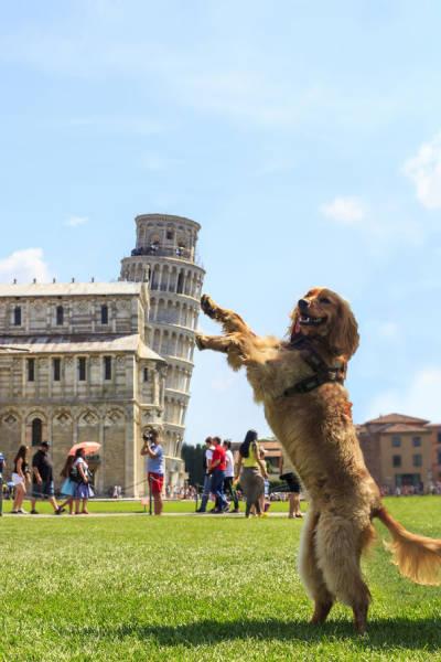 ピサの斜塔の記念撮影の画像(17枚目)