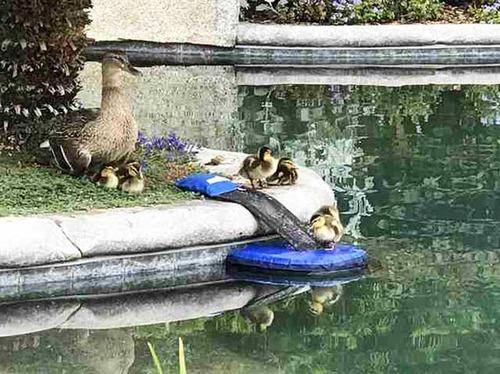 プールに落ちた動物を救うアイテムの画像(10枚目)