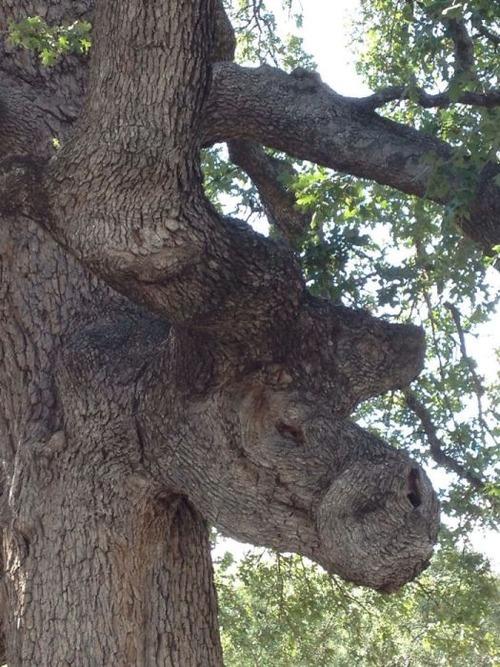 不気味な形の樹木の画像(13枚目)