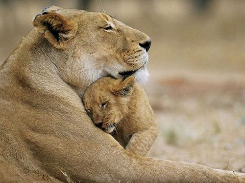 色々な動物の親子の癒される画像の数々!!の画像(12枚目)