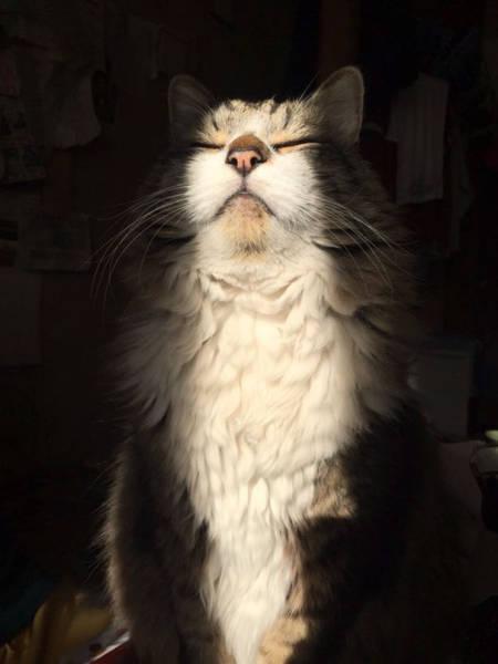 神々しい猫の画像(44枚目)