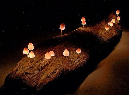 本物のような光るキノコのようなライトが可愛い!!の画像(3枚目)