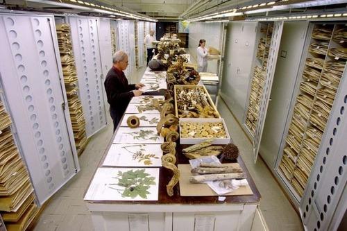 【画像】アメリカを代表するスミソニアン博物館の標本の保存倉庫が凄い!!の画像(1枚目)