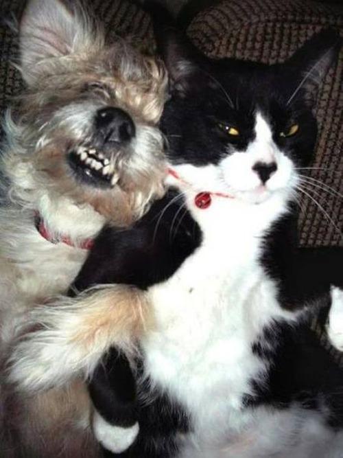 猫と犬の力関係の画像(22枚目)
