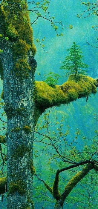 生えている樹木の画像(24枚目)