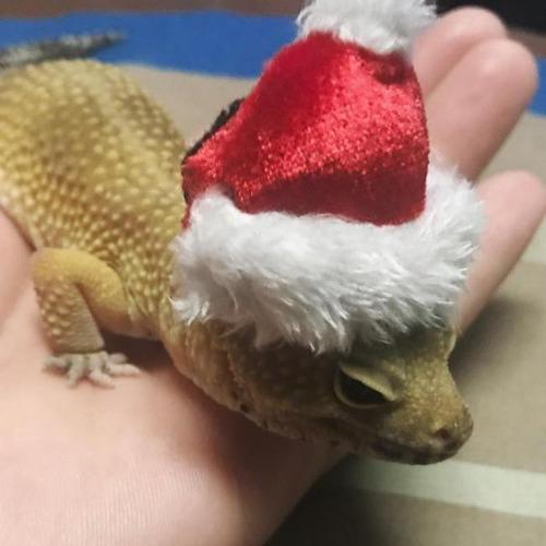 クリスマスのコスプレをした動物達の画像(18枚目)