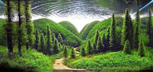 美しく神秘的な水辺の画像(2枚目)