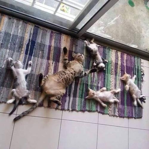 神々しい猫の画像(28枚目)