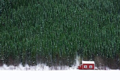 森の中の隠れ家の画像(33枚目)