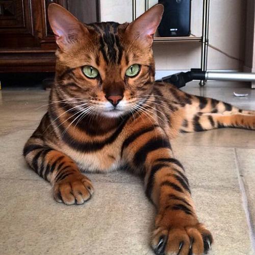 かわい過ぎる猫ちゃんの画像(27枚目)