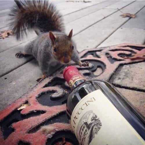 お酒大好き?お酒が好きそうな動物の画像の数々!!の画像(3枚目)