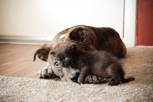 ほのぼのする!仲の良い犬と猫の画像の数々!!の画像(35枚目)