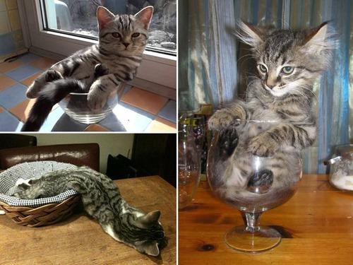 器に入った猫の画像(14枚目)