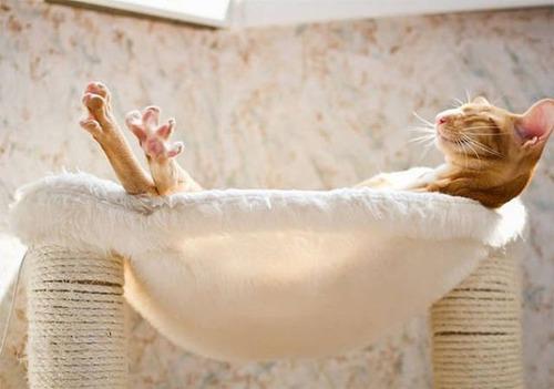 神々しい猫の画像(1枚目)