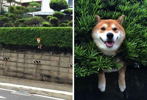 犬はバカ可愛い!!バカだけど憎めない可愛い犬の画像の数々!!の画像(3枚目)