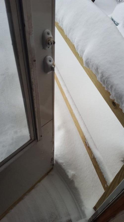 【画像】大雪のニューヨークで日常生活が大変な事になっている様子!の画像(25枚目)