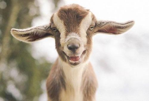幸せそうな表情の動物達の画像(29枚目)