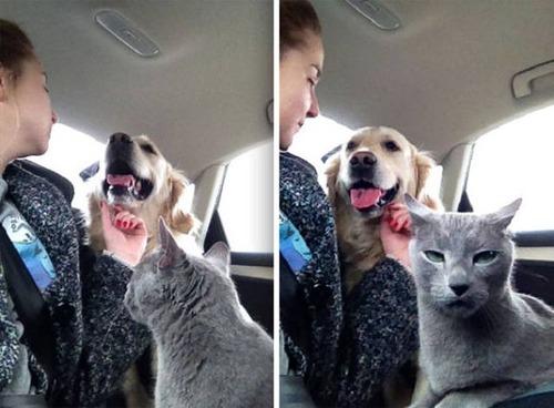 猫と犬の力関係の画像(1枚目)