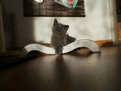 神々しい猫の画像(19枚目)