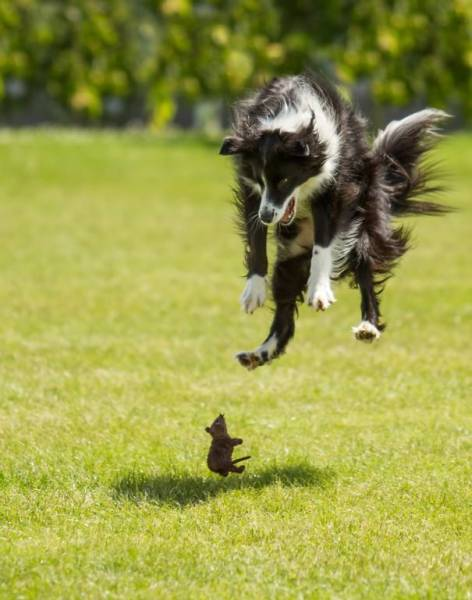 怯えてる犬の画像(5枚目)