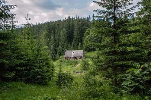 森の中の隠れ家の画像(11枚目)
