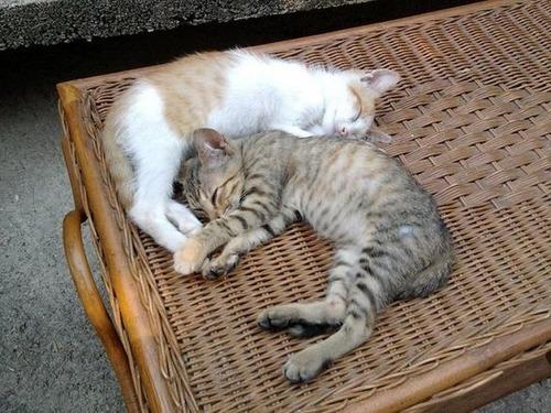 可愛く眠っている動物達の画像(1枚目)