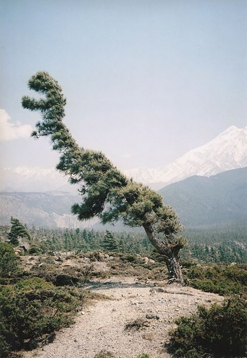不気味な形の樹木の画像(26枚目)