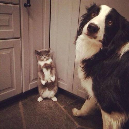 猫と犬の力関係の画像(11枚目)