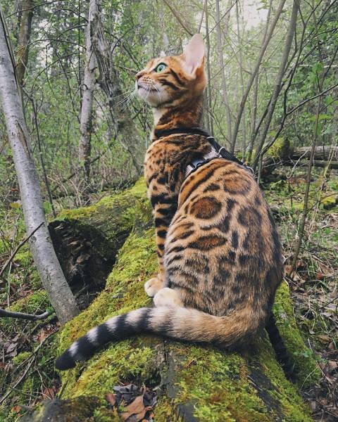 美しい風景と猫の画像(33枚目)