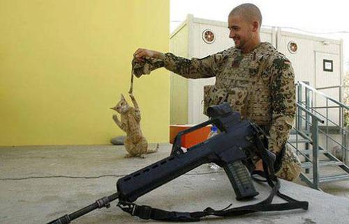 戦場にもネコは居る!!極限状態でも癒される戦場のネコの画像の数々!!の画像(11枚目)