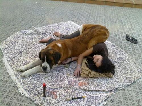 犬は可愛いけど、かなりジャマな感じの犬の画像の数々!!の画像(34枚目)