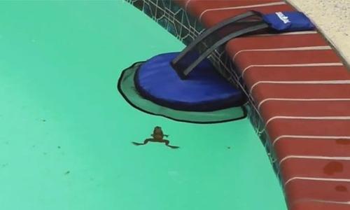 プールに落ちた動物を救うアイテムの画像(4枚目)