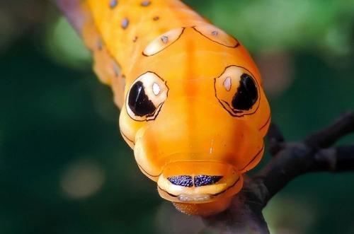 怪しすぎる見た目の昆虫の画像(13枚目)