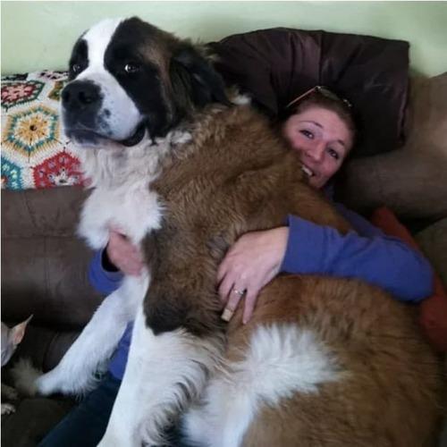 大きすぎる犬の画像(20枚目)