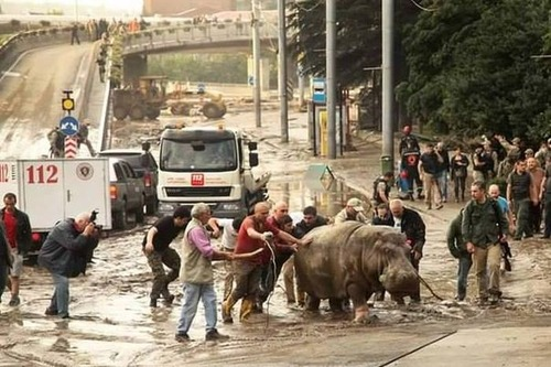 洪水で動物達が大脱走した時の写真の数々wwの画像(1枚目)