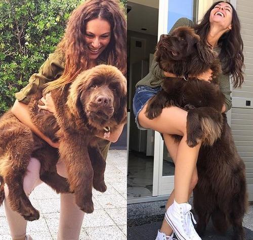 大きすぎる犬の画像(1枚目)