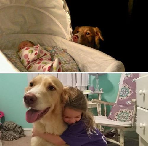 犬の成長の画像(2枚目)